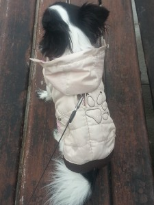 Doudoune pour chihuahua avec ouverture pour le harnais.
