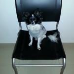 """Le chien, un """"bien meuble""""!"""