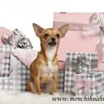 Cadeau pour chihuahua