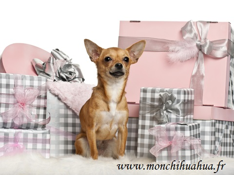 les box pour chiens des coffrets remplis de surprises mon chihuahua. Black Bedroom Furniture Sets. Home Design Ideas
