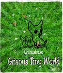 Elevage chihuahua LOF Grisous Tiny World