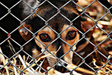 adopter un chien dans un refuge